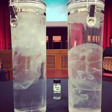 plastic bag jellyfish